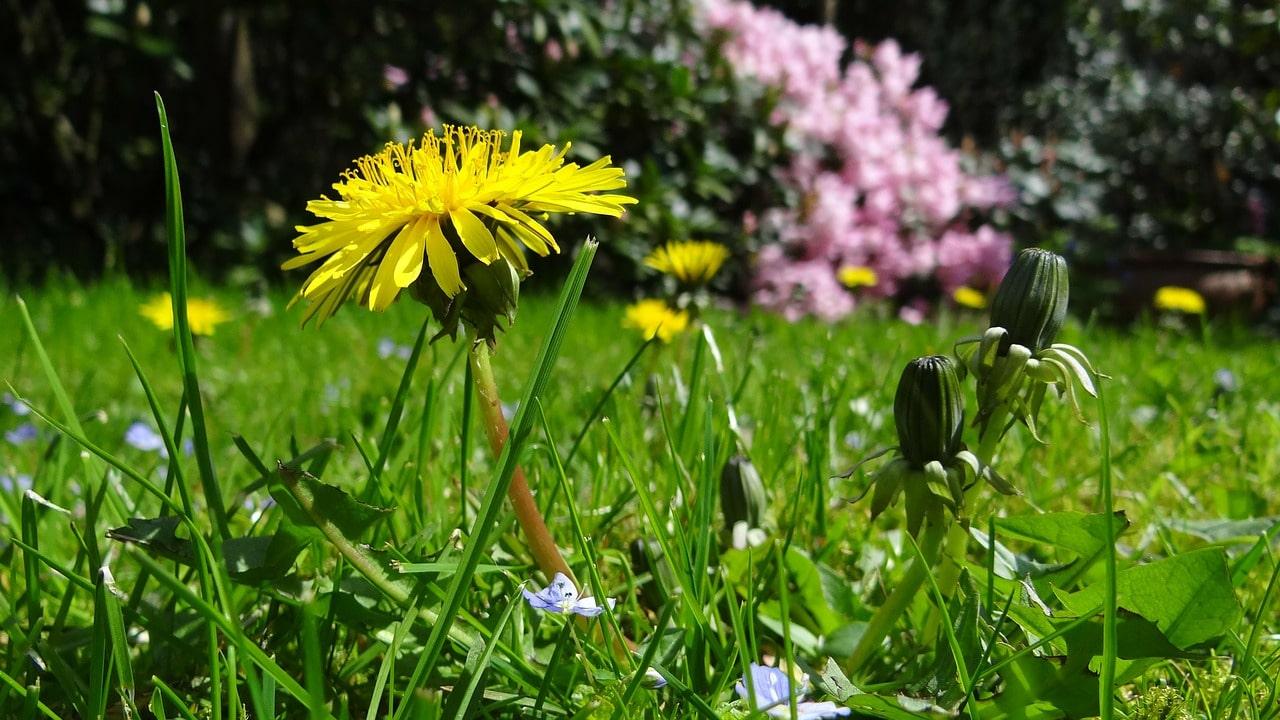 meadow-43467_1280 Protecting Pollinators