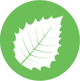 Leaf About Us