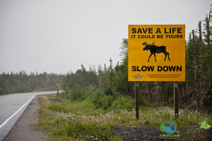 2010-July-27-10270-300x200 Wildlife Facts: Moose