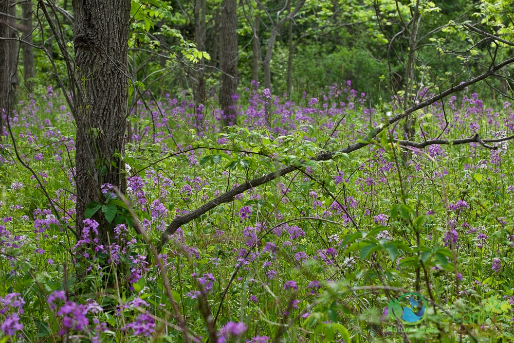 2015-May-29-8031 Late May Walk Through Bridgeview Park, Petrolia