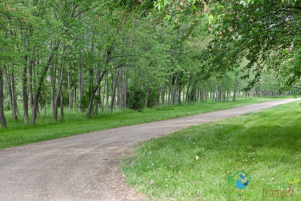 2015-May-29-8084 Late May Walk Through Bridgeview Park, Petrolia