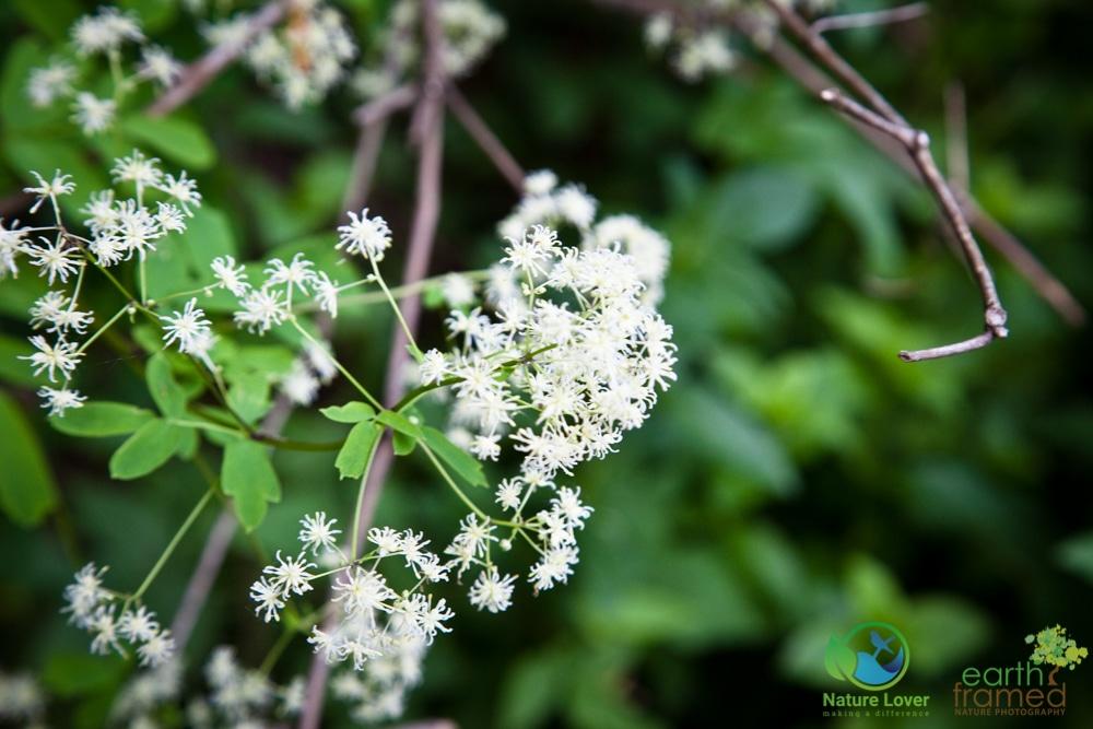 2015-July-03-8493 Wildflowers at Earl Rowe