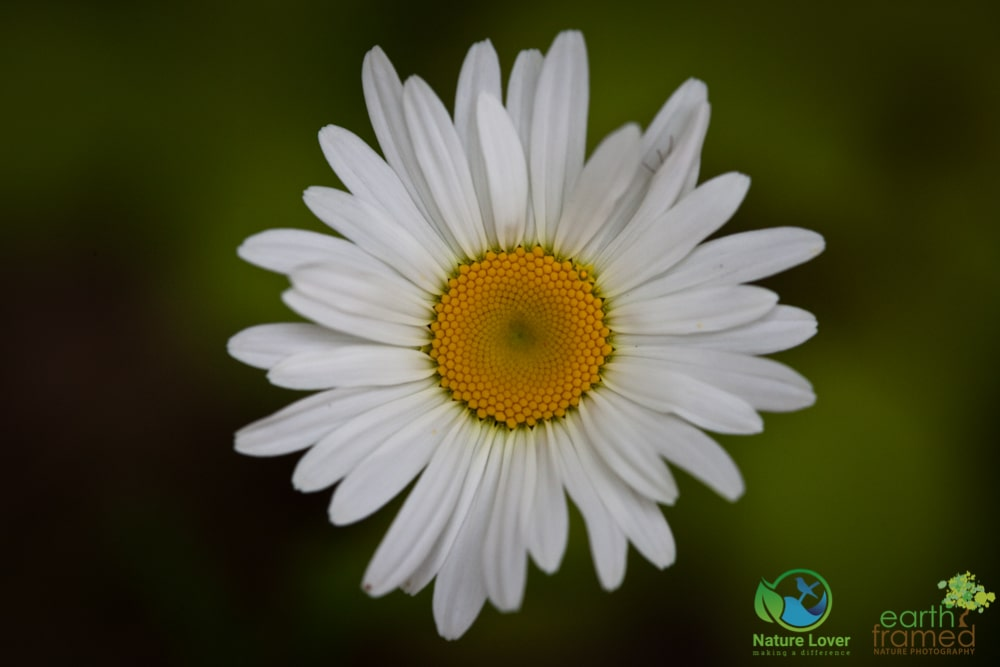 2015-July-06-8788 Summer Wildflowers at Arrowhead