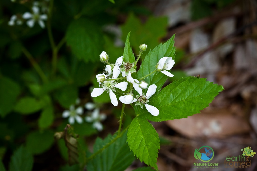 2015-July-07-89551 Summer Wildflowers at Arrowhead