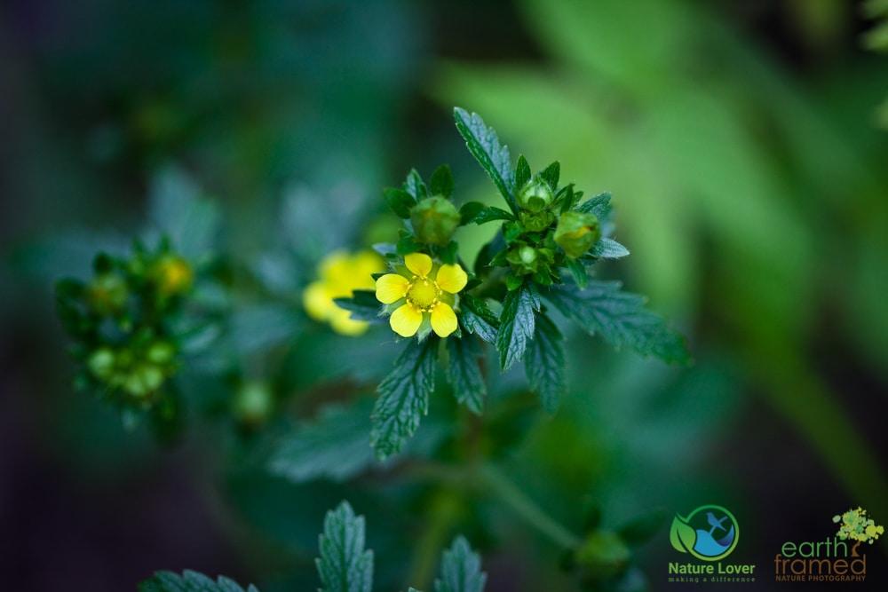 2015-July-07-8964 Summer Wildflowers at Arrowhead