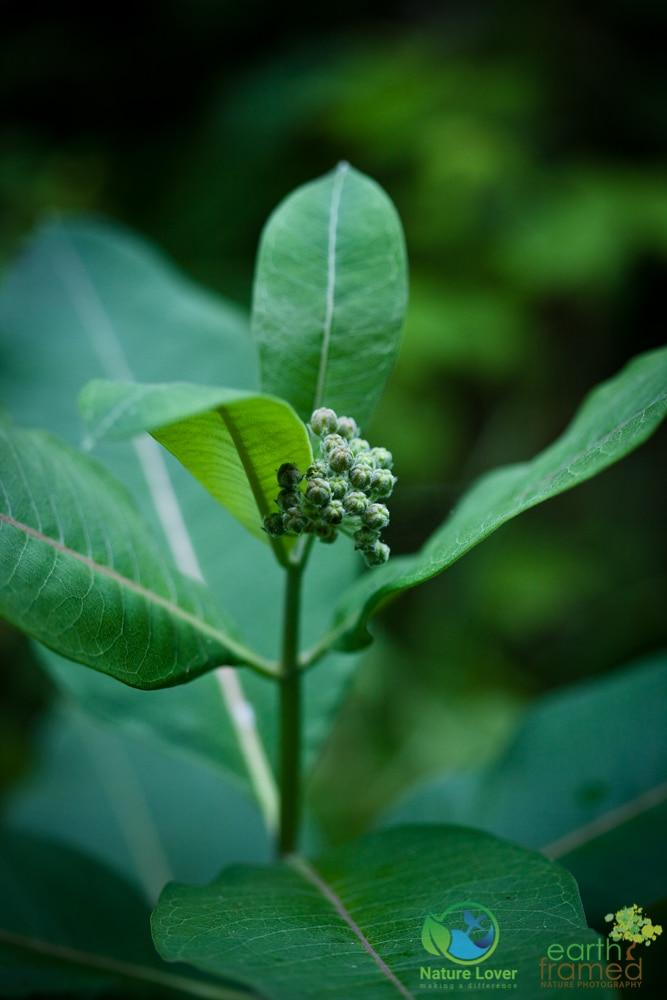 2015-July-07-8969 Summer Wildflowers at Arrowhead