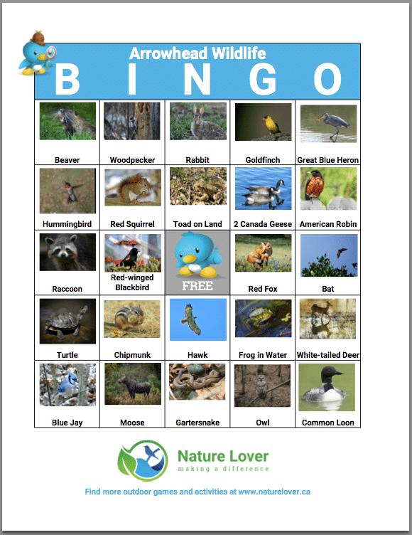 Arrowhead-Wildlife-BINGO-Preview2 Arrowhead Wildlife BINGO Activity Sheet