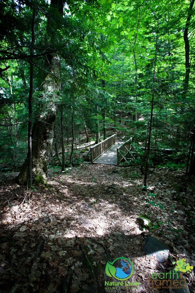 2015-July-09-9197 Restoule's Spectacular Fire Tower Trail