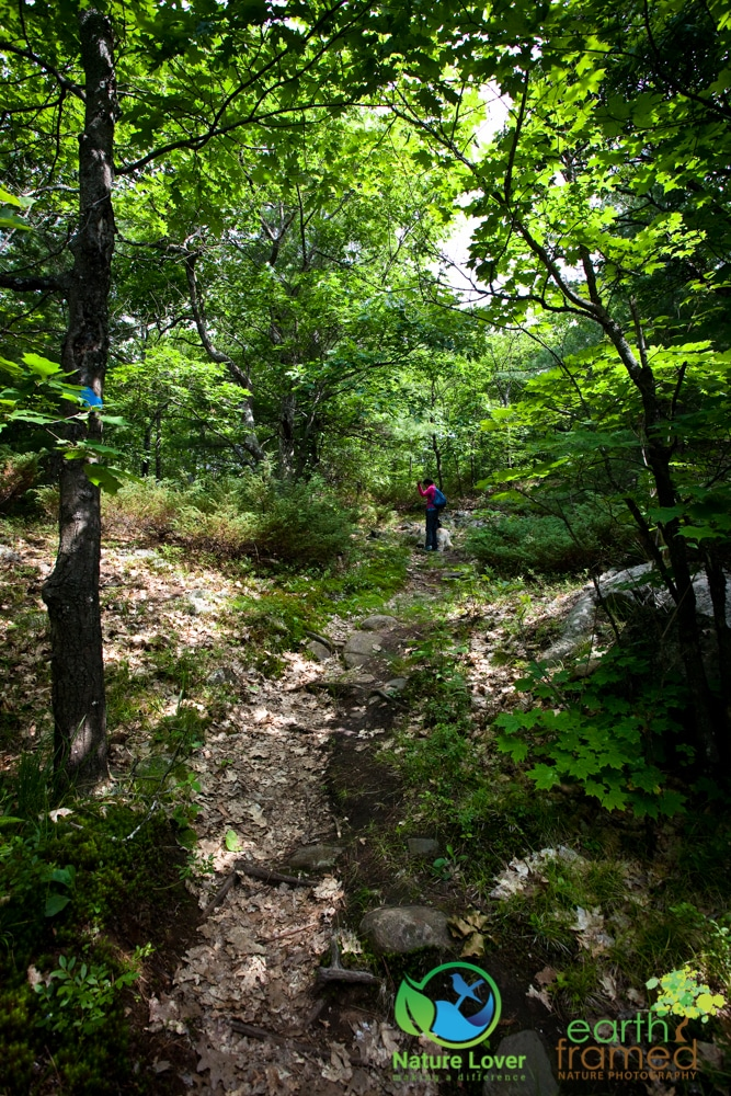 2015-July-09-9208 Restoule's Spectacular Fire Tower Trail
