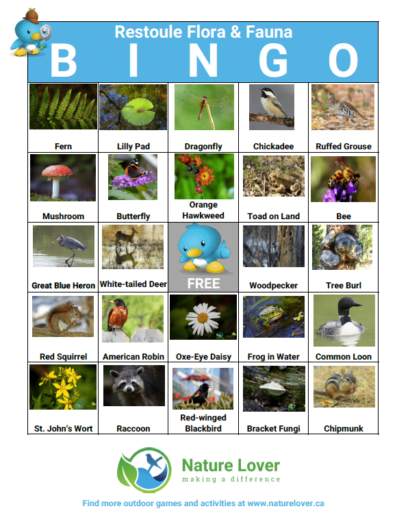 Wildlife-BINGO-Restoule-preview Restoule Flora & Fauna BINGO Activity Sheet