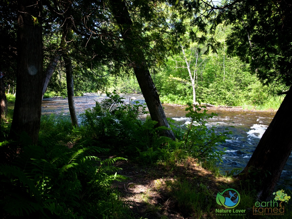 2015-July-11-9526 Exploring the Eau Claire Gorge Conservation Area