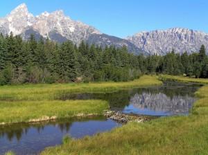 grand-teton-national-park-80548_1280-300x224 Wildlife Facts: North American Beaver