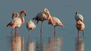flamingos-1205366_1920-300x169 A Group of Flamingos