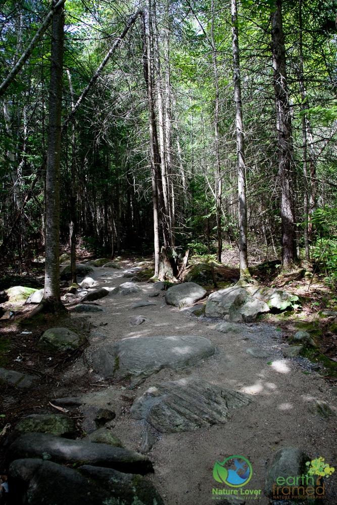 2009-August-27-1833 Algonquin's Beaver Pond Trail