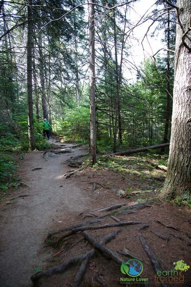2009-August-27-1843 Algonquin's Beaver Pond Trail