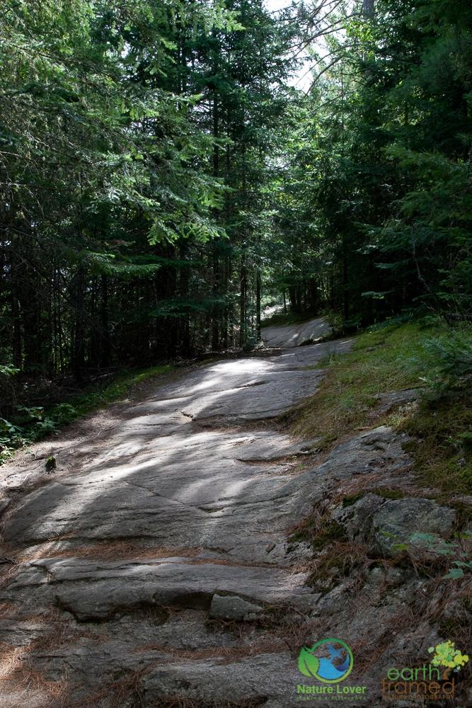 2009-August-27-1908 Algonquin's Beaver Pond Trail