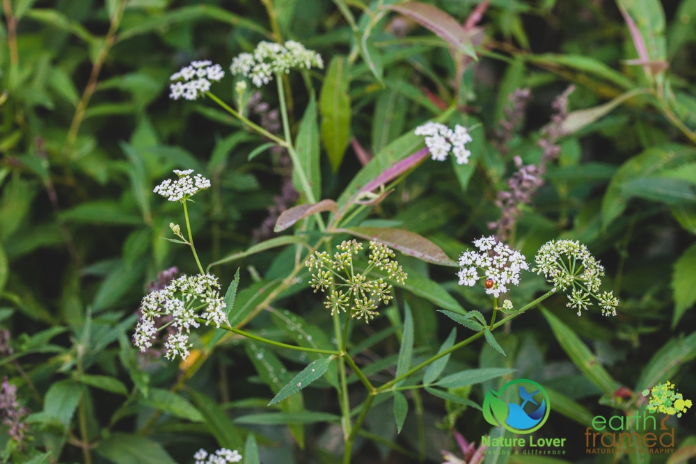 2015-August-27-2817 Summer Wildflowers at Bridgeview Conservation Area