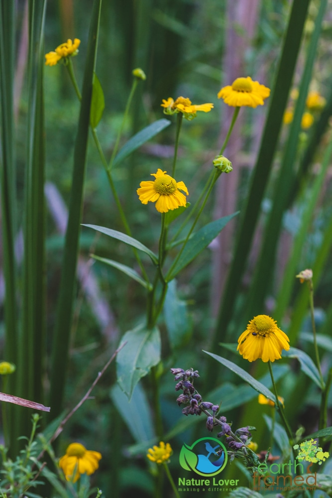 2015-August-27-2820 Summer Wildflowers at Bridgeview Conservation Area
