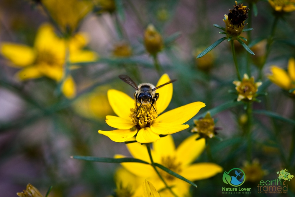 2015-August-20-2448-1 Nectar For The Pollinators