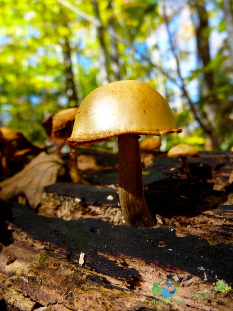 2010-October-09-14467 Mushrooms Along the Bruce Trail