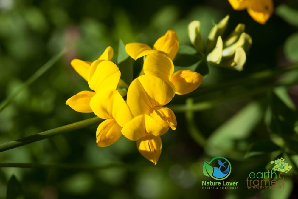 2015-July-15-9783 Halfway Lake Wildflowers and Plants