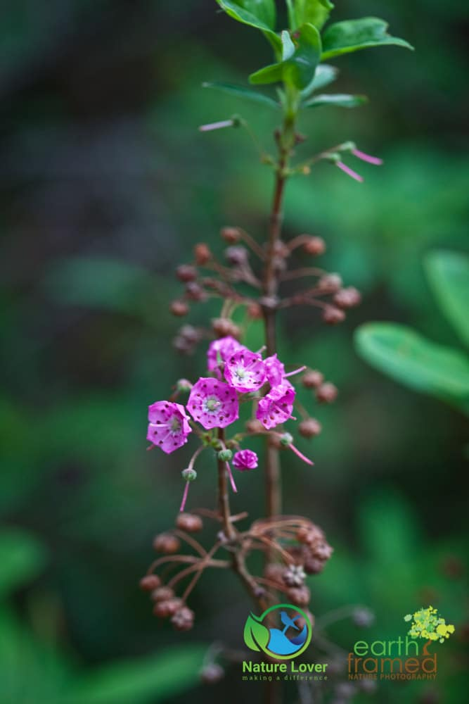 Nature-Lover-2015-Camping-Summer-Transition-Trail-Wildflower-Windy-Lake-Provincial-Park_0139 Windy Lake Wildflowers and Plants