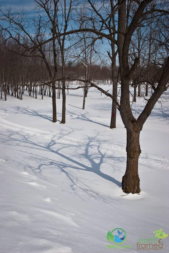 2008-Petrolia-Winter-Bridgeview-Conservation-Area-003 Winter Shapes and Shadows at Petrolia's Bridgeview Conservation Area