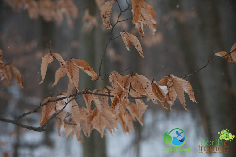 2015-February-21-6760 Snowshoeing Through Mandaumin Woods