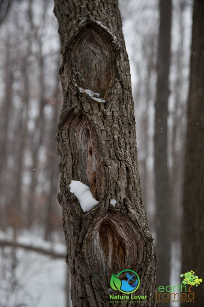 2015-February-21-6765 Snowshoeing Through Mandaumin Woods