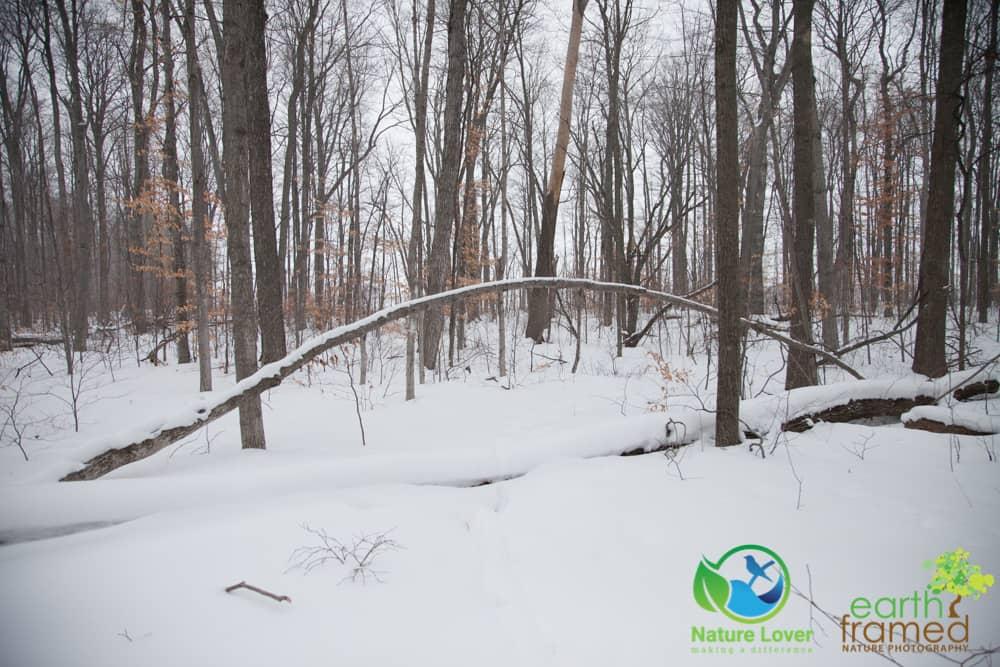 2015-February-21-6780 Snowshoeing Through Mandaumin Woods