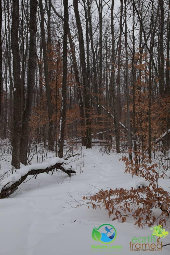 2015-February-21-6783 Snowshoeing Through Mandaumin Woods