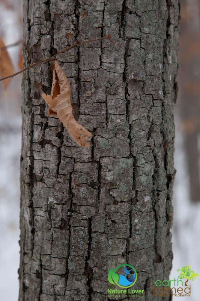 2015-February-21-6786 Snowshoeing Through Mandaumin Woods