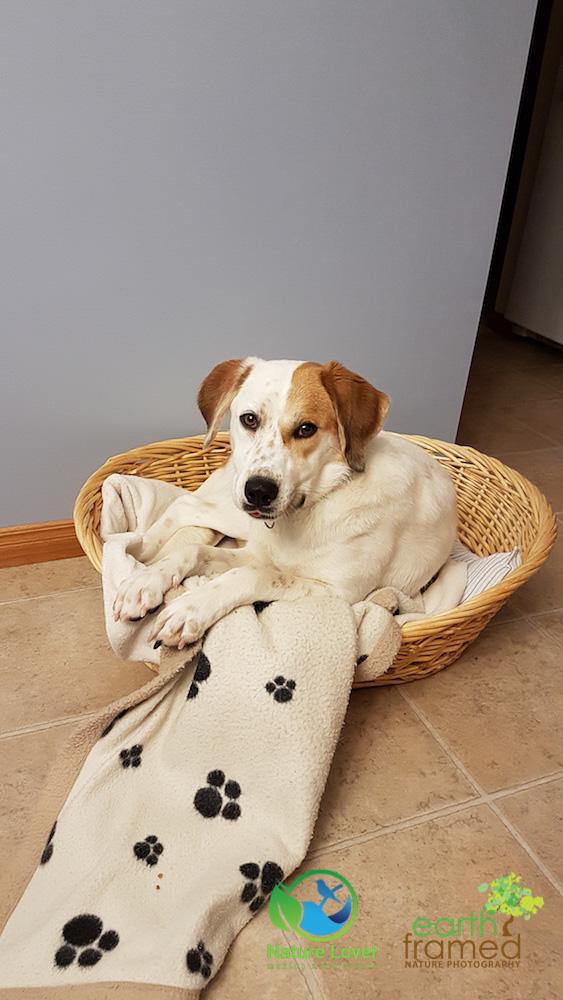 Nature-Lover-Canine-Explorer-Chloe-Hound-Mix_073731_Nov-23 Chloe The Canine Explorer Joins the Naturelover Family!