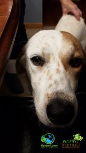 Nature-Lover-Canine-Explorer-Chloe-Hound-Mix_173307_Nov-23-169x300 Chloe The Canine Explorer Joins the Naturelover Family!