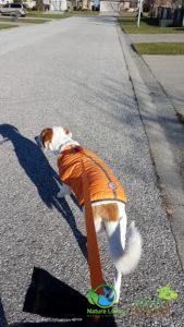 Nature-Lover-Canine-Explorer-Chloe-Hound-Mix_2_Nov-24-169x300 Chloe The Canine Explorer Joins the Naturelover Family!