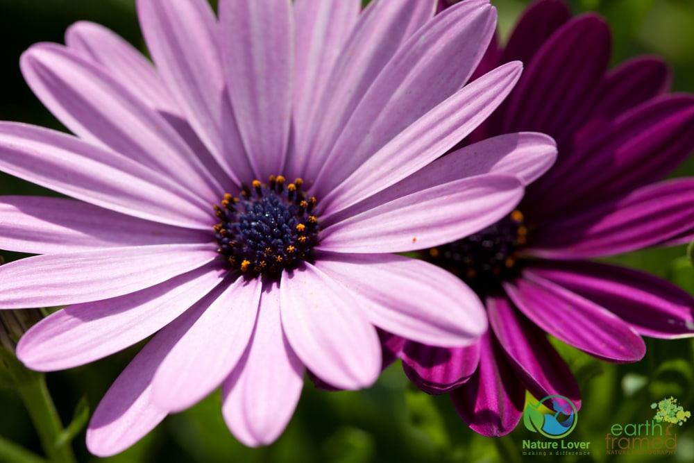 Germain Park S Gorgeous Flower Garden